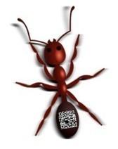 QR codes help University researchers to understand ants | qrbarna | Scoop.it
