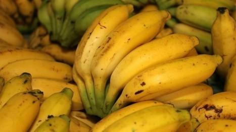 Banana Republic Justice: Behind The Scenes Of The Pirate Bay Trial | Libertés Numériques | Scoop.it