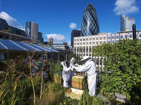 Next stop, the Olympics: Urban farmers are digging for eco-victory | Food issues | Scoop.it