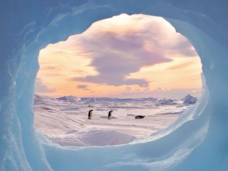 Penguin Picture -- Antarctica Photo -- National Geographic Photo of the Day | Antarctica | Scoop.it