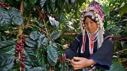Thailand's mountainous coffee journey | Travel and Travel Tips | Scoop.it