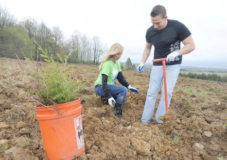 Tree planting at Flight 93 site serves as tribute to victims, boost for habitat (with VIDEO) | Forestry Conservation | Scoop.it