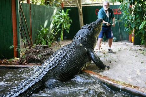 Largest crocodile in captivity shown in photos - GrindTV.com | Xposed | Scoop.it