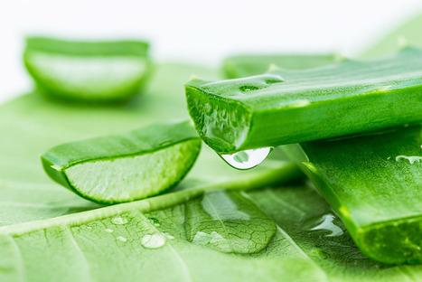 Khắc phục da đầu nhiều dầu, bết dính bằng cách nào? | Làm web chuẩn SEO chuyên nghiệp ở Hà Nội | Scoop.it
