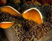 Indonesia - Regulate the Aquarium Trade - The Petition Site | Nature Animals humankind | Scoop.it