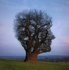 Mindsight: The New Science of Personal Transformation? | A New Paradigm of Development | Scoop.it