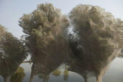 En image : des arbres couverts de toiles d'araignée au Pakistan | Musette | Scoop.it