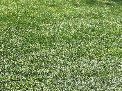 Summer Lawn Care Tips | Gardening Life | Scoop.it
