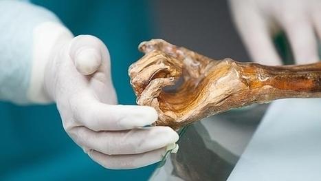 Ötzi, el «Hombre de hielo», se queda sin familia materna | Arqueología, Historia Antigua y Medieval - Archeology, Ancient and Medieval History byTerrae Antiqvae (Blogs) | Scoop.it