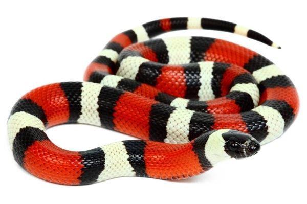 L'examen de son premier serpent -8ZZFDDfewZcf5ws5uWkOYXXXL4j3HpexhjNOf_P3YmryPKwJ94QGRtDb3Sbc6KY