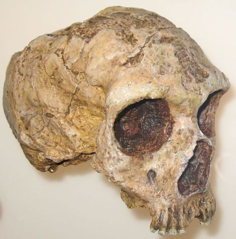500,000-Year-Old Neanderthal Viruses Found in Modern Human DNA --(Did We Interbreed?) | Humans Being | Scoop.it