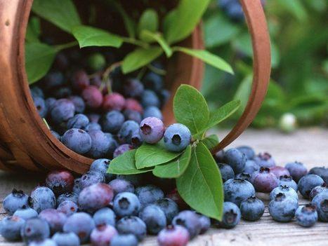 Los principales beneficios del arándano azul para la salud | Apasionadas por la salud y lo natural | Scoop.it