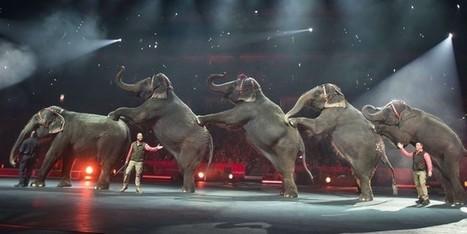 Les associations de défense des animaux auront eu raison du Cirque Barnum | Biodiversité | Scoop.it