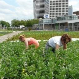 Wikistedia - Groen, gezond en schoon door stadslandbouw | eetbaar amsterdam | Scoop.it