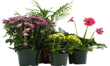 10 Houseplants That Clean the Air | 100 Acre Wood | Scoop.it