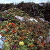 Food waste (English)