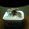 Grow Lights For Seedlings