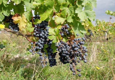 Damien Menut (Loire) | Gastronomy & Wines | Scoop.it