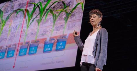 TED talk from our collaborator Jill Farrant: How we can make crops survive without water - TEDGlobal Geneva | Wageningen Seed Lab | Scoop.it