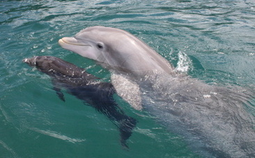 Dolphins Have Their Own Names for Each Other | This Gives Me Hope | Scoop.it