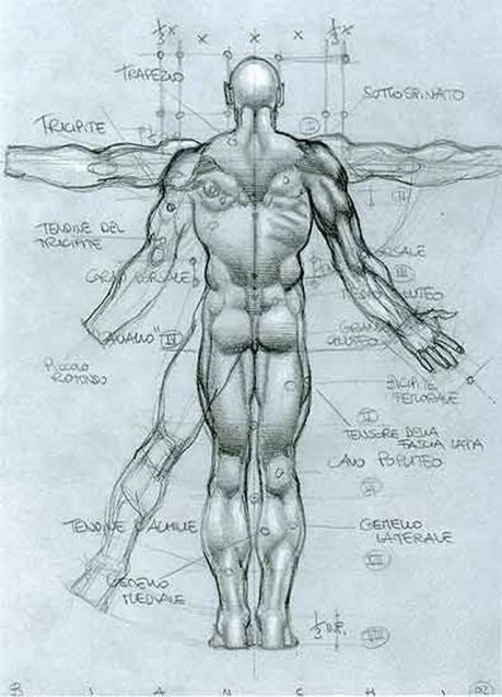 Anatomy Drawing In Drawing References And Resources