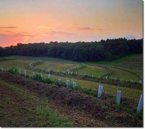 Make Use of the USDA's Unofficial Support of Permaculture | Sustainable Futures | Scoop.it