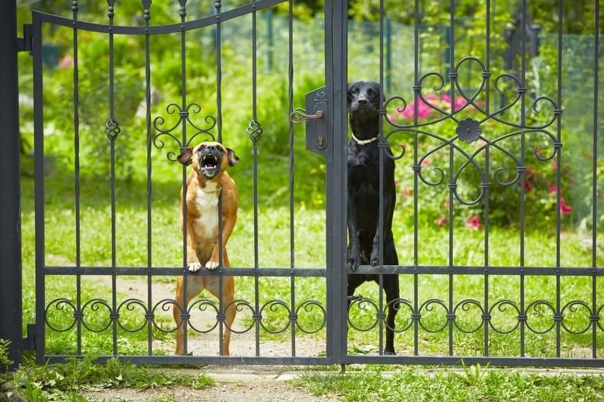 ANIMAUX. Votre chien aboie, mais pourquoi ?
