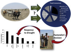 Rangeland forage availability and management in times of drought – A case study of pastoralists in Afar, Ethiopia | Ecosystèmes Tropicaux | Scoop.it