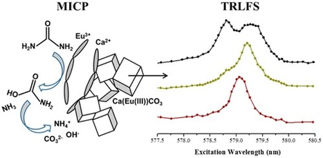Study of the Interaction of Eu3+ with Microbiologically Induced Calcium Carbonate Precipitates using TRLFS | Mineralogy, Geochemistry, Mineral Surfaces & Nanogeoscience | Scoop.it