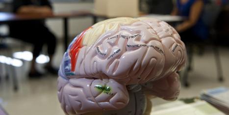 10 Myths About Traumatic Brain Injury | Social Neuroscience Advances | Scoop.it
