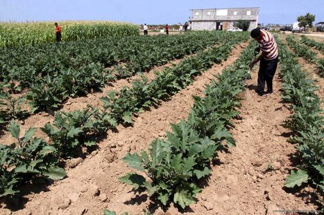 Morocco GDP to grow by 4.7 per cent during third quarter ... - Middle East Monitor - Middle East Monitor | Agricultural & Horticultural Industry News | Scoop.it
