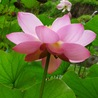 Lotus: Evidence-based Flourishing