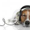 animales y música