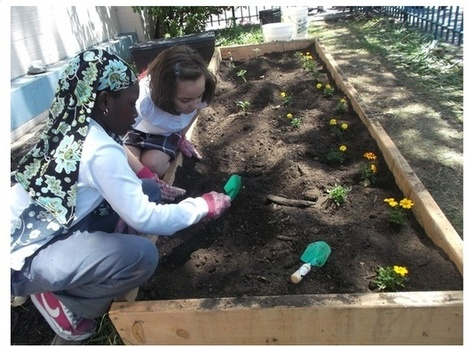 A City Education: Growing Strawberry Beds in a South Bronx School | Vertical Farm - Food Factory | Scoop.it