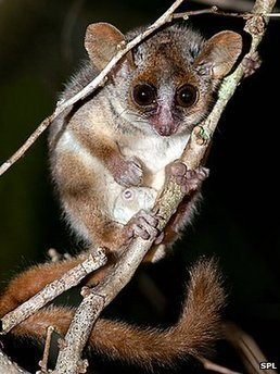Lemurs sliding towards extinction | Complex Insight  - Understanding our world | Scoop.it