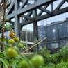 Agriculture urbaine, architecture et urbanisme durable