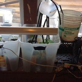 Garduino: Gardening + Arduino | Arduino, Netduino, Rasperry Pi! | Scoop.it