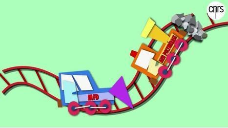 Les clés d'un processus majeur de réparation de l'ADN - CNRS | Scientific Innovations in Biology | Scoop.it