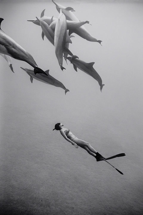 Stunning Photos of Freedivers Interacting with Sharks, Dolphins, Whales and Rays | All about nature | Scoop.it