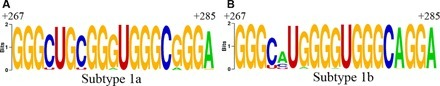 A highly conserved G-rich consensus sequence in hepatitis C virus core gene represents a new anti–hepatitis C target | Hepatitis C New Drugs Review | Scoop.it