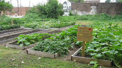 Could cities rely 100% on urban agriculture for their food? | green streets | Scoop.it
