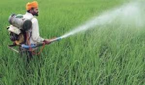 L'Inde s'aligne en matière d'interdiction de pesticides utilisés | Questions de développement ... | Scoop.it