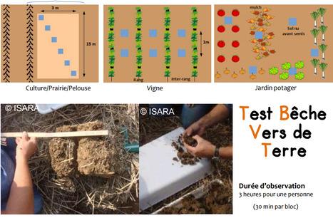 Guide de terrain :Test Bêche Vers de Terre Protocole A4 | SPATEN   Test Bêche | Scoop.it