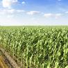 Crop Sciences