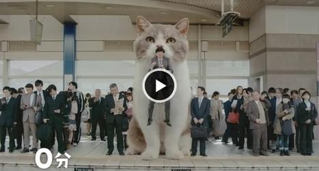 Pub japonaise pour un chewing-gum avec un chat géant   CaniCatNews-actualité   Scoop.it