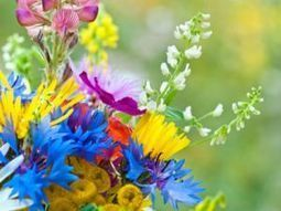 Why bees & biodiversity benefit from indigenous wildflowers - Green Living - The Ecologist | The Glory of the Garden | Scoop.it