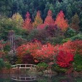 22 Serene Japanese Garden Pictures   A Love of Japanese Gardens   Scoop.it