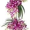 Mumbai Flowers World