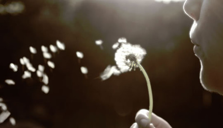 Destructive Daydreams: Why Wishful Thinking Is Dangerous   HealthSmart   Scoop.it