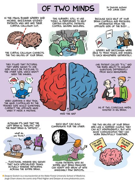 Split-Brain Patients Reveal Brain's Flexibility: Scientific American | Teacher Learning Networks | Whole Brain Leadership | Scoop.it